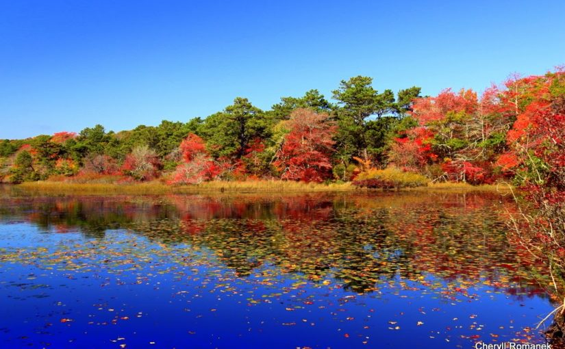 photo of A coastal Beech Forest captures vibrant blue water in foreground circled by trees and leaves of bright red, orange and yellow.